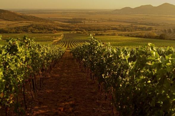 Región vinícola de Tokaj. Hungría