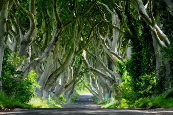 Dark Hedges, Irlanda del Norte
